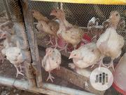6 Weeks Broiler | Livestock & Poultry for sale in Ondo State, Akure
