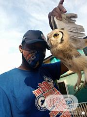 Baby Owl For Sale | Birds for sale in Delta State, Ugheli