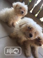 Baby Male Purebred Maltese | Dogs & Puppies for sale in Rivers State, Obio-Akpor