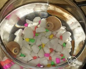 Fish Bowl For Office And House Decoration   Pet's Accessories for sale in Lagos State, Surulere