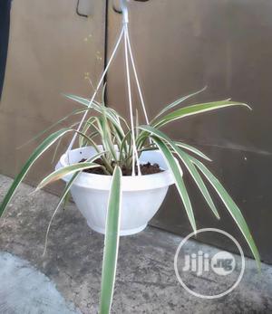 Indoor Plants | Garden for sale in Lagos State, Ojo