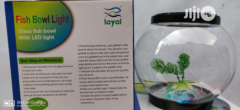 LED Fish Bowl