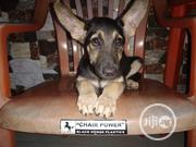Baby Female Mixed Breed German Shepherd | Dogs & Puppies for sale in Rivers State, Obio-Akpor