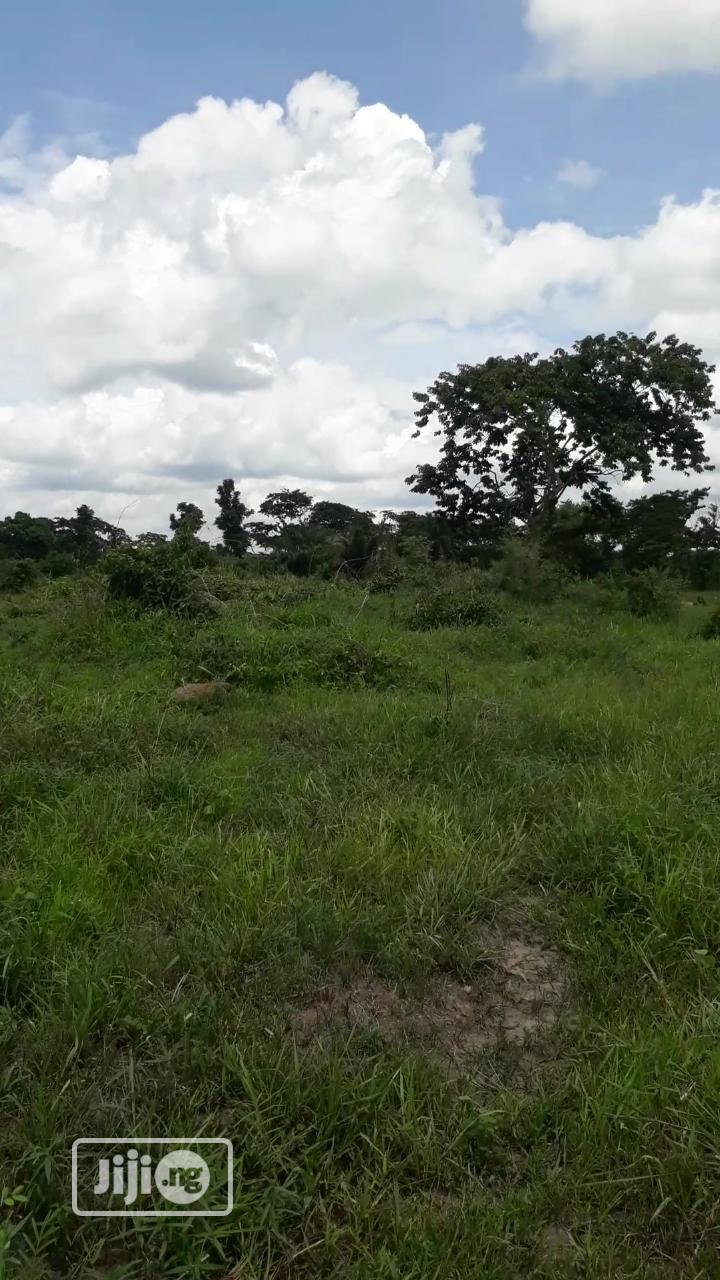 Acres of Farm Land for Sale at Araromi Owode via Ibese Town | Land & Plots For Sale for sale in Ilaro, Ogun State, Nigeria
