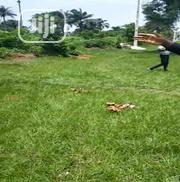 Affordable Plots of Land on the Strategic Sam Mbakwe Airport Road ,Imo | Land & Plots For Sale for sale in Imo State, Owerri