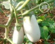 Garden Eggplant | Feeds, Supplements & Seeds for sale in Lagos State, Ojodu