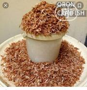 Healthy Oron Crayfish   Livestock & Poultry for sale in Imo State, Orlu