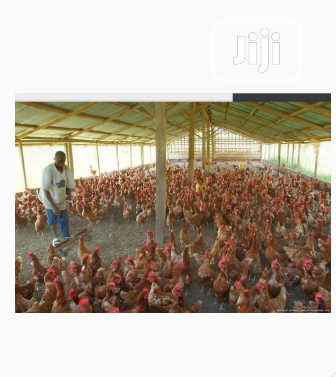 Land For Sale At Siun Ogun State 45min Drive To Ikeja | Land & Plots For Sale for sale in Obafemi-Owode, Ogun State, Nigeria