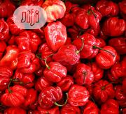Atarodo Peppers (Scotch Bonnet) | Meals & Drinks for sale in Lagos State, Alimosho
