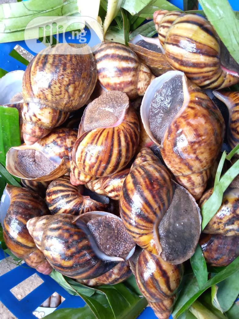 Jumbo Size Snails
