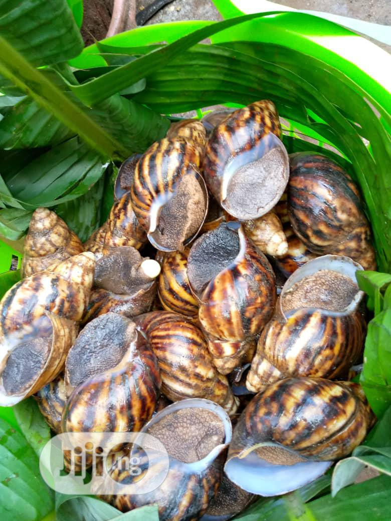 Jumbo Size Snails | Livestock & Poultry for sale in Lekki, Lagos State, Nigeria
