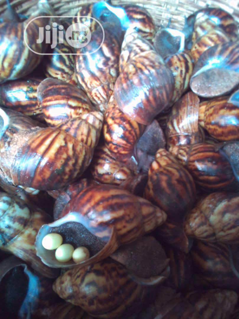 Archive: Medium Size Snail