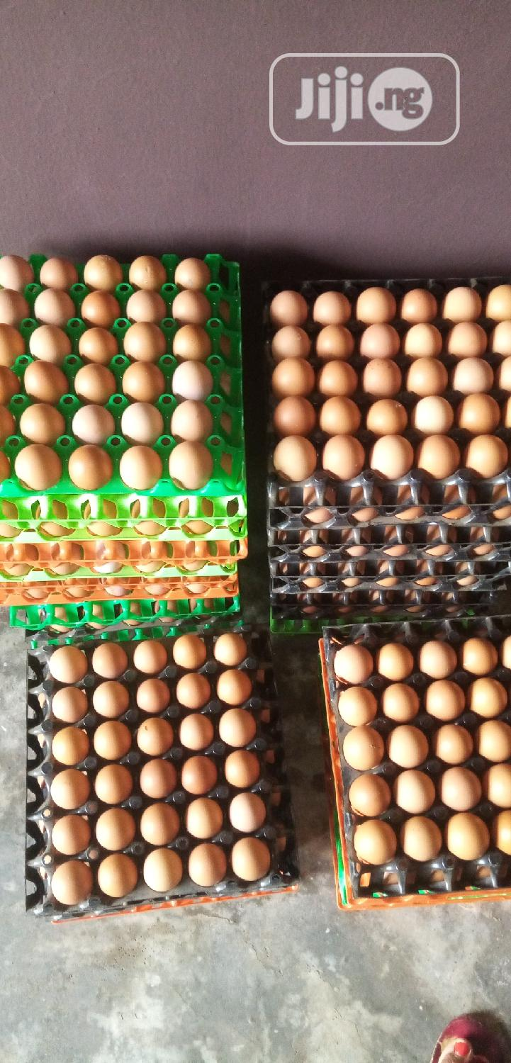 Wholesale Eggs Sorted And Unsorted