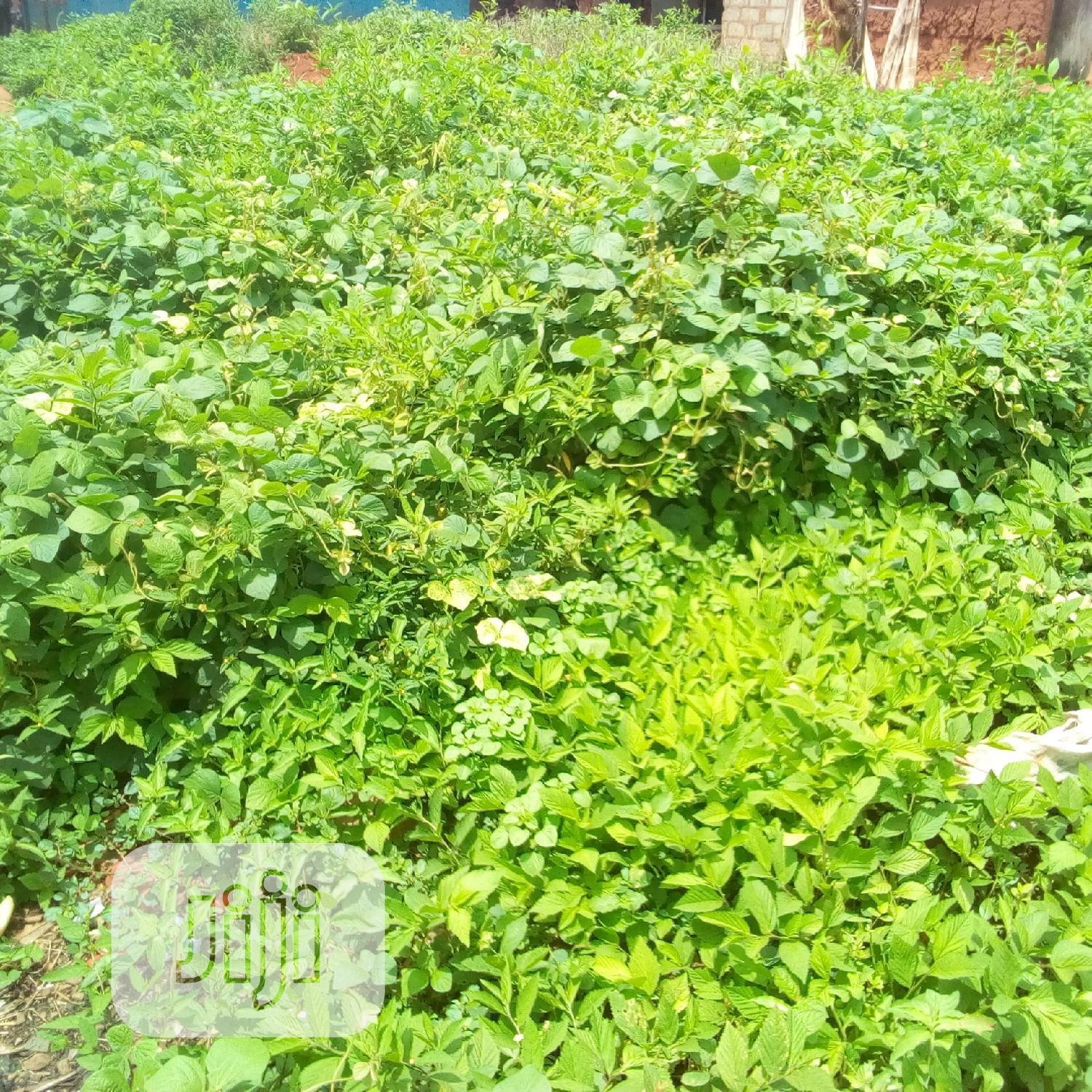 Rensidential Land 120/60 For Sale | Land & Plots For Sale for sale in Okitipupa, Ondo State, Nigeria