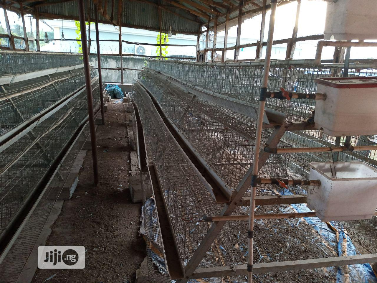 Archive: Battery Cage For Laying Birds