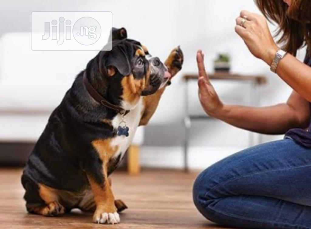 Dog Training   Pet Services for sale in Jabi, Abuja (FCT) State, Nigeria