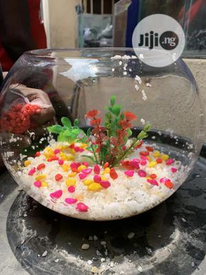 Fish Bowl Aquarium | Fish for sale in Lagos State, Lekki
