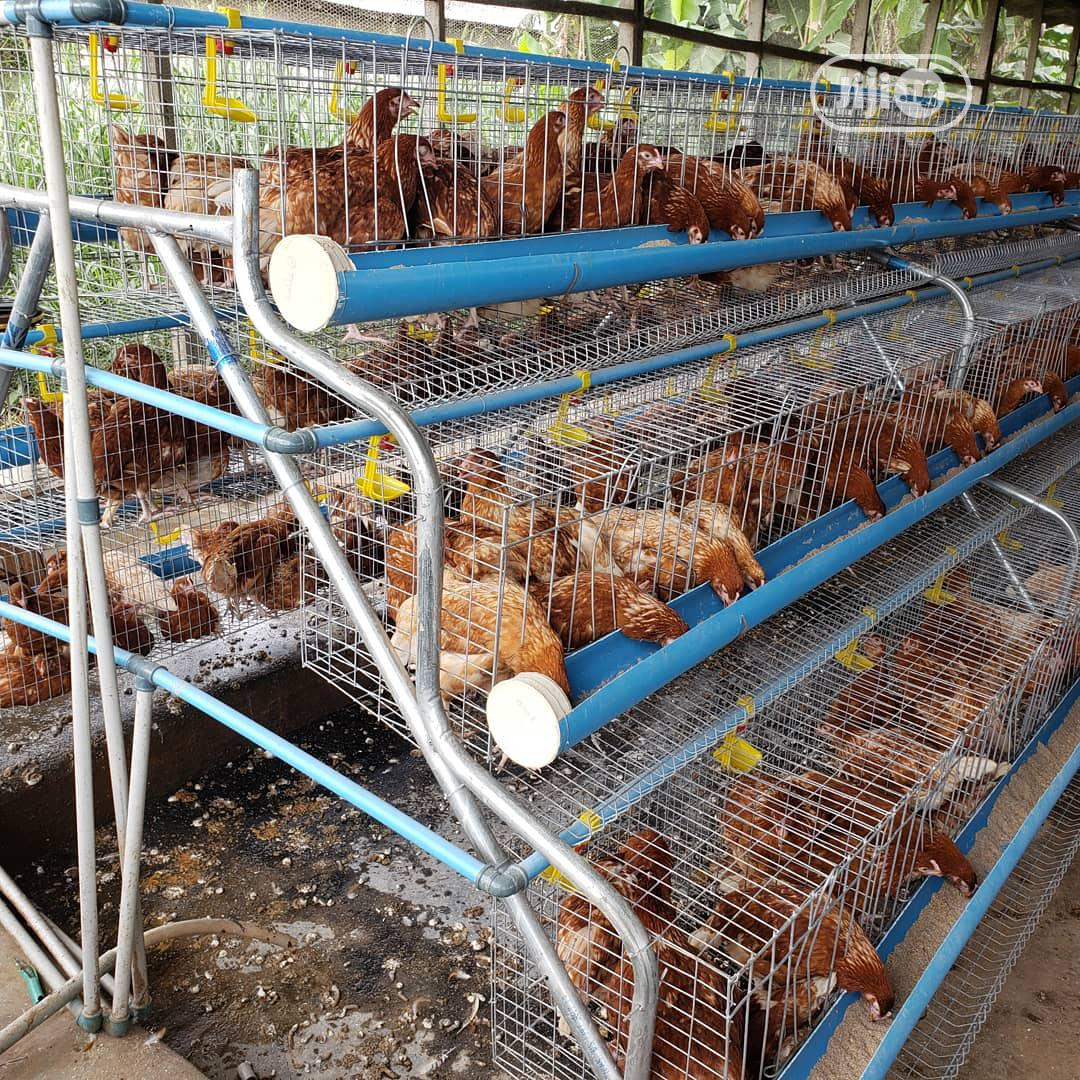Farmers Layer Cage