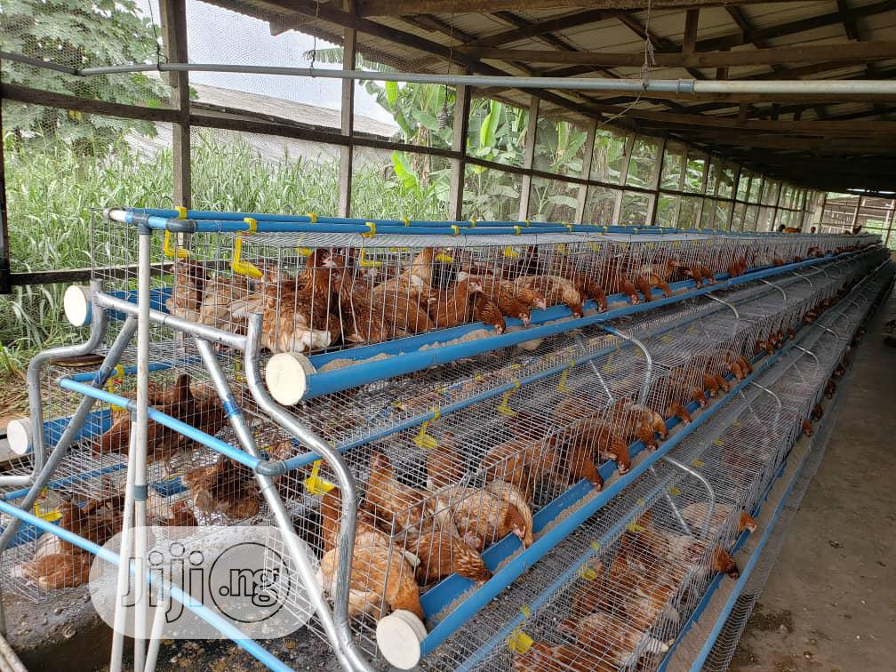 POULTRY Farm Cages For Modern Farmers
