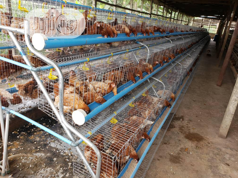 POULTRY Farmers Real Cage