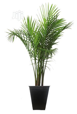 Ornamental Fake Plant | Garden for sale in Lagos State, Ikeja