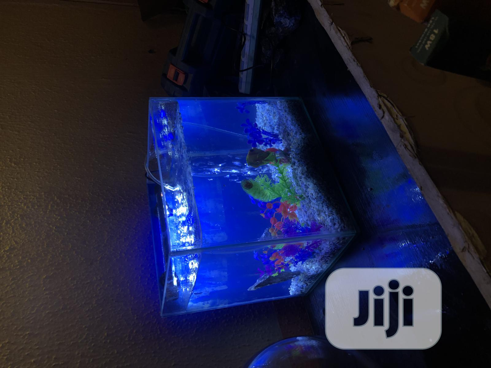 Archive: Mini Aquarium Fish Tank