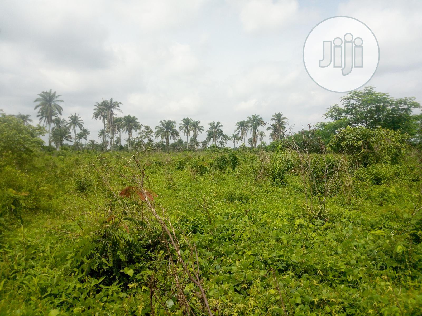 Archive: Strategic 8 Acres of Land Near Civilization Near Iyana Offa