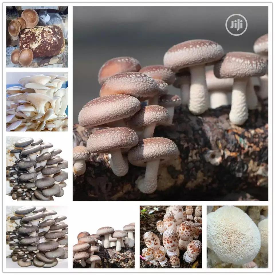 Mushroom Vegetables Seeds