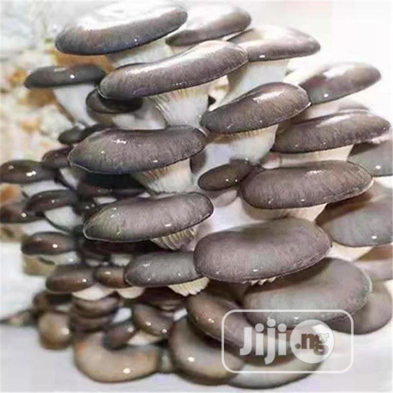 Mushroom Vegetables Seeds | Meals & Drinks for sale in Ikeja, Lagos State, Nigeria