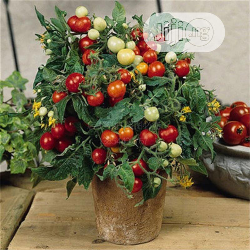 Cherry Tomatoes Seeds | Meals & Drinks for sale in Ikeja, Lagos State, Nigeria