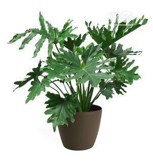 Fake Plant For Aesthetic Design | Garden for sale in Lagos State, Ikeja