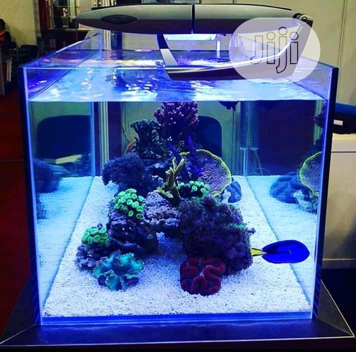 Archive: Aquarium Construction
