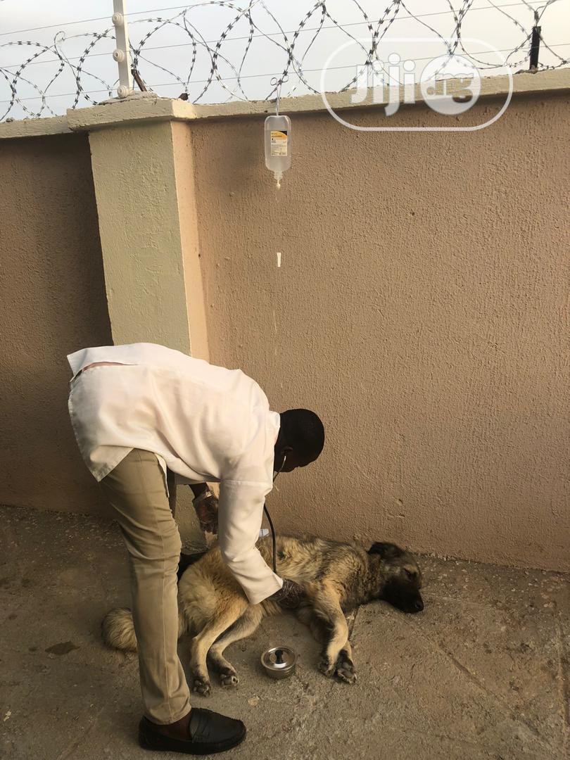 Veterinary Services | Pet Services for sale in Dei-Dei, Abuja (FCT) State, Nigeria