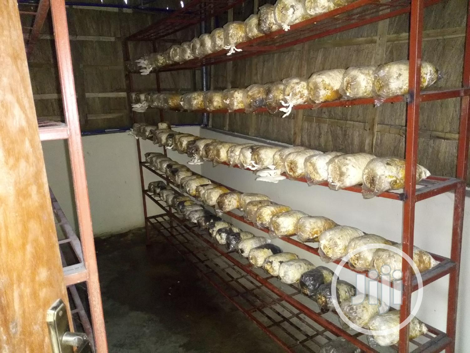 Mushroom/Spawn Sales and Training   Manufacturing Services for sale in Ikorodu, Lagos State, Nigeria