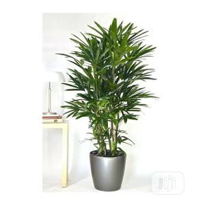 Grand Potted Synthetic Plant | Garden for sale in Lagos State, Ikeja