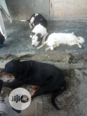 Animal Boarding Services | Pet Services for sale in Lagos State, Ikorodu