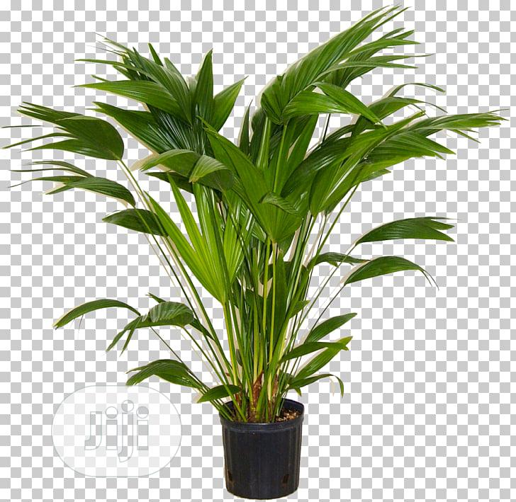 Deluxe Potted Evergreen Faux Plant