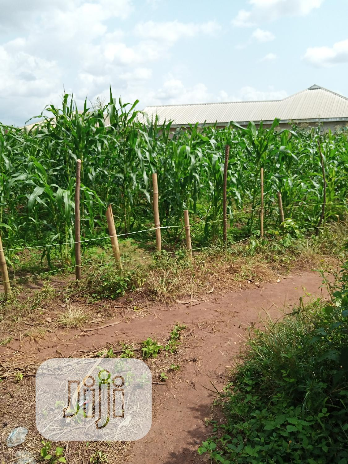50/100 Land for Sale at Ogbomro, Warri