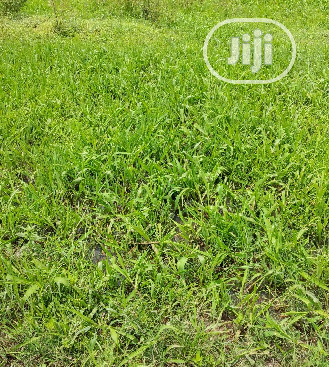10plots Of Land For Lease At Abijor Ibeju Lekki Facing Epe Exp Rd