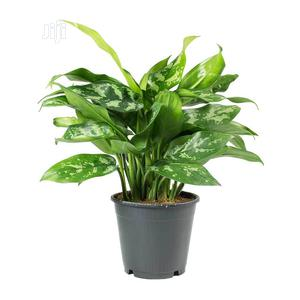 Fake Plant For Hotels, Office, Schools. | Garden for sale in Lagos State, Ikeja