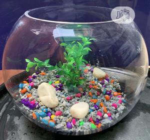 Fish Bowl Tank | Fish for sale in Lagos State, Lekki