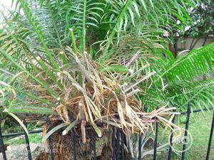 Flower Installation And Treatment | Landscaping & Gardening Services for sale in Lagos State, Ikoyi