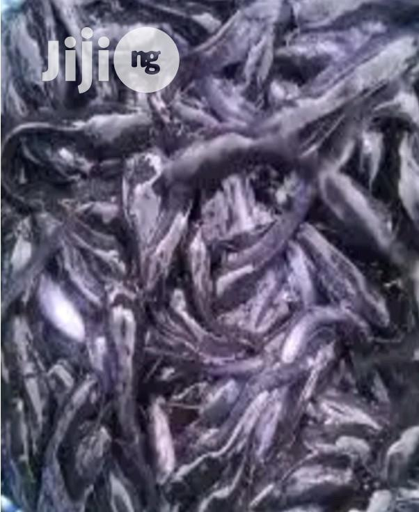 Healthy Catfish Juveniles | Livestock & Poultry for sale in Ilorin West, Kwara State, Nigeria