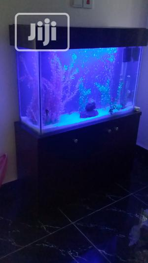 Aquarium And Fountains | Fish for sale in Abuja (FCT) State, Katampe