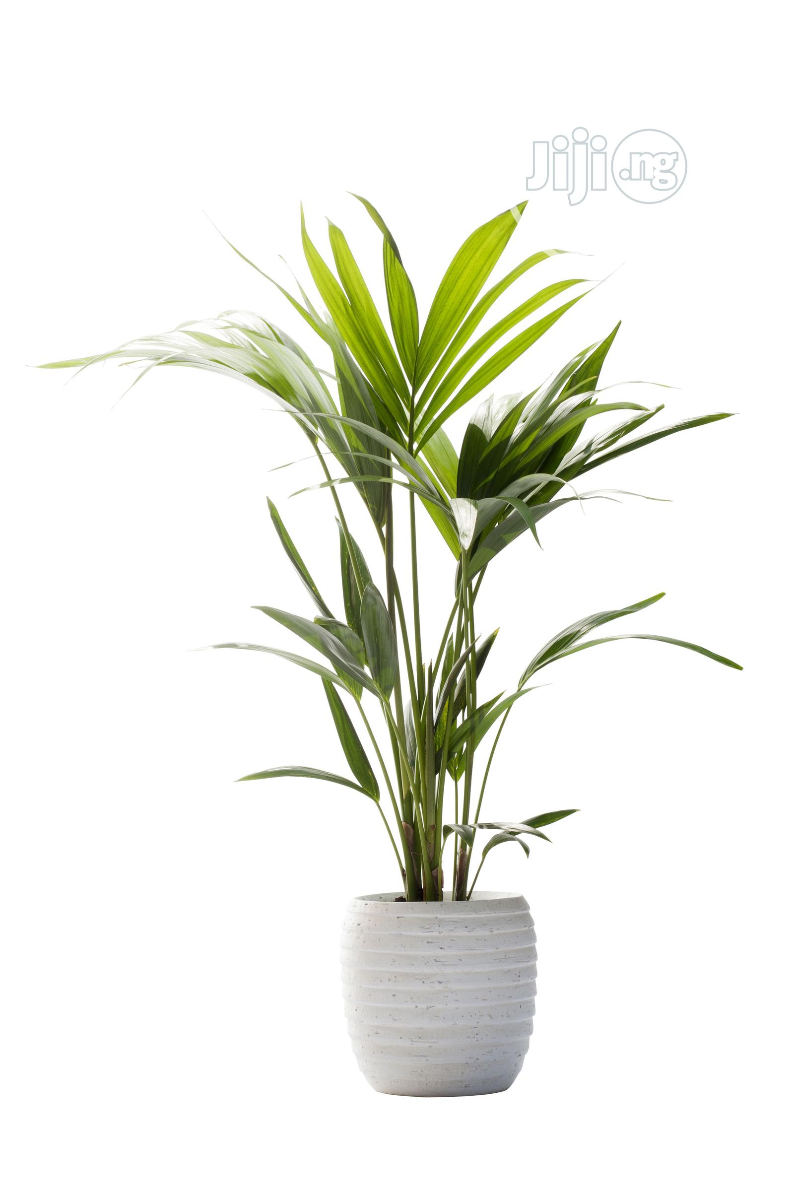 Decorative Faux Plant Home Office Usage In Ikeja Garden Bethelmendels Artificial Grass Jiji Ng