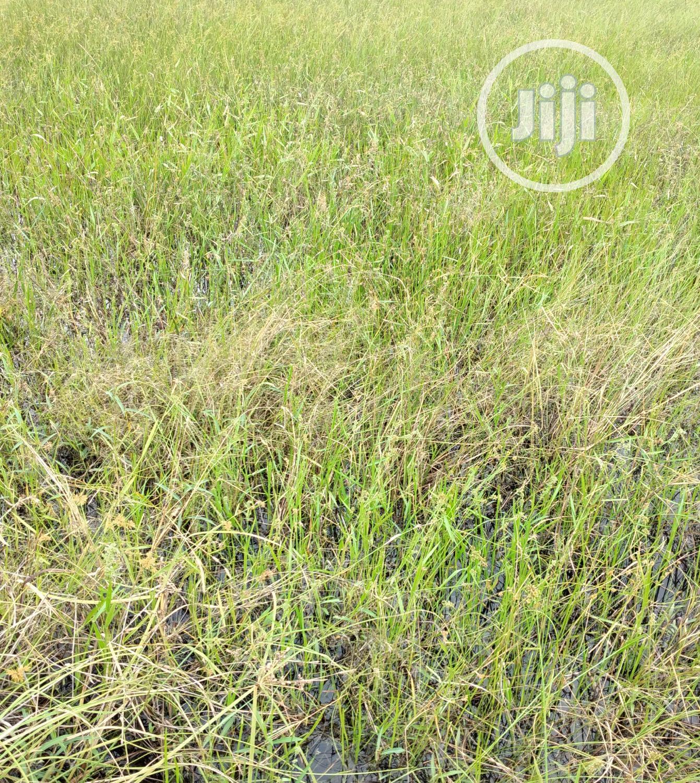 1700sqm Land For Sale At Off Durosimi Eti Lekki Phase 1