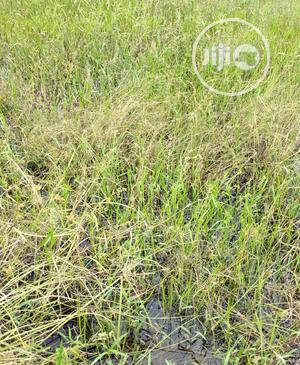 2400sqm Land For Lease At Chief Collins Street Lekki Ph 1 | Land & Plots for Rent for sale in Lagos State, Lekki