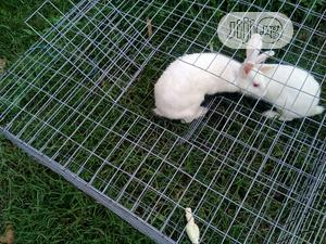 Rabbit Cage | Pet's Accessories for sale in Abuja (FCT) State, Bwari