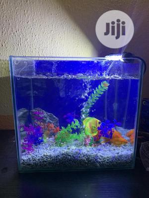 Mini Table Top Aquarium   Fish for sale in Lagos State, Lekki