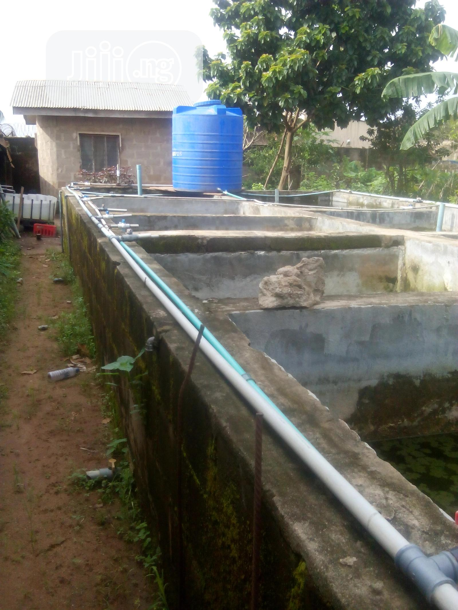 Fish Farm-11 Fish Ponds For Rent At Akute Off Ojodu/Berger